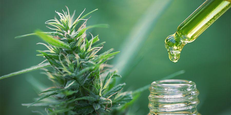 Comestibles Concentrés De Cannabis : Calculez Correctement le Dosage