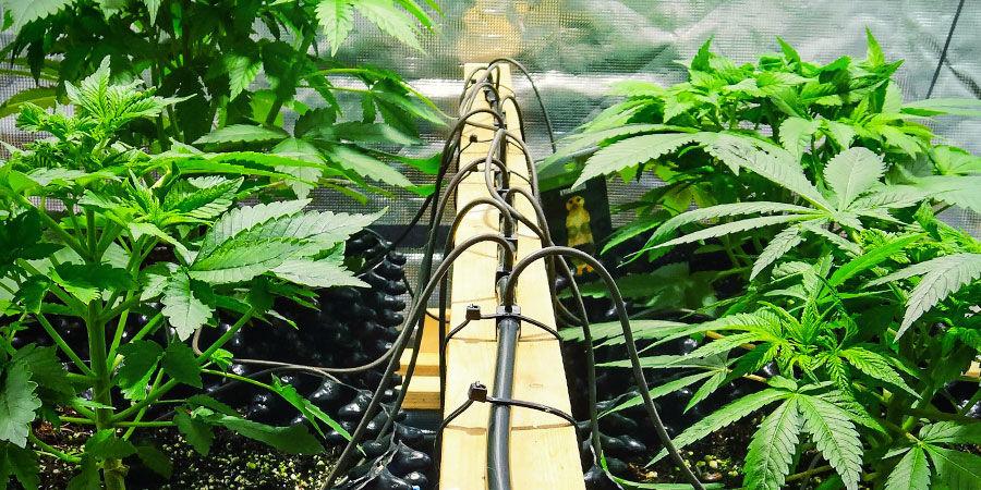 Les Options du Commerce - Système d'irrigation
