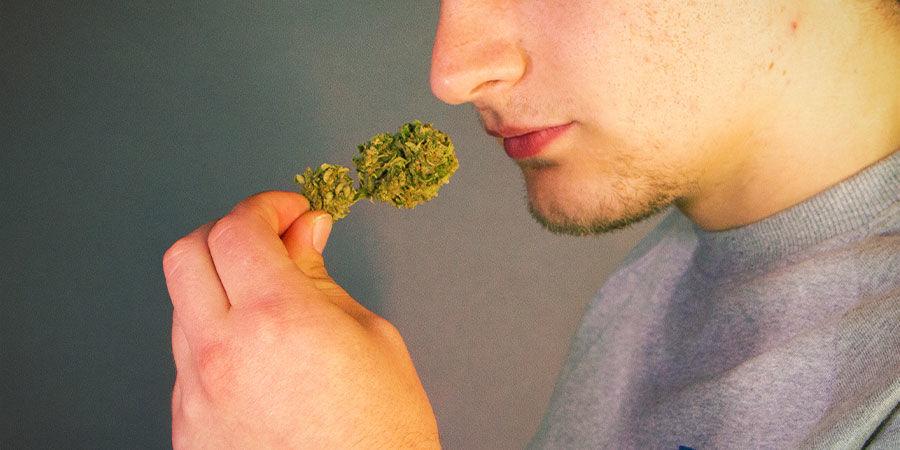 Détecter Les Contaminants Dans Le Cannabis : Sentez Et Goûtez Votre Herbe Avant De L'Allumer