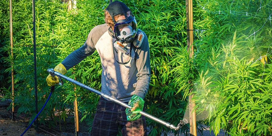 Types De Contaminants Dans Le Cannabis : Pesticides Ou Engrais Industriels
