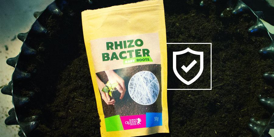 Comment les Rhizobactéries Protègent les Plants de Cannabis ?