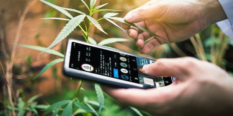 Suivez Des Comptes Qui Critiquent Des Weeds Sur Les Réseaux Sociaux