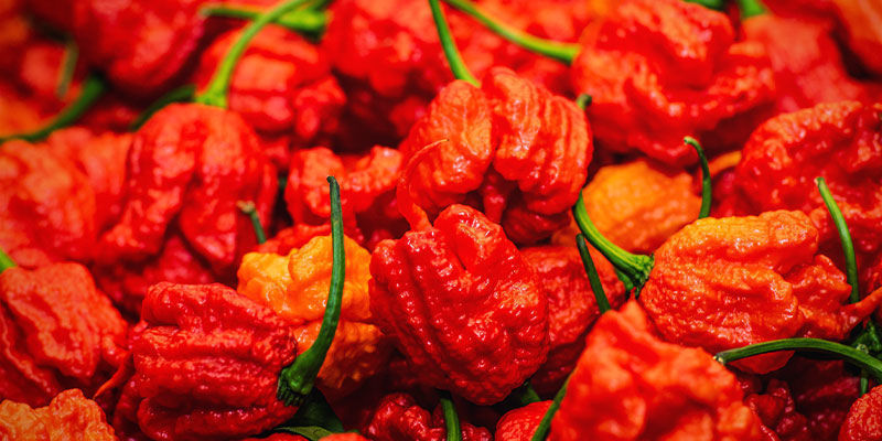 Piments Plus Forts: Infinity Pepper