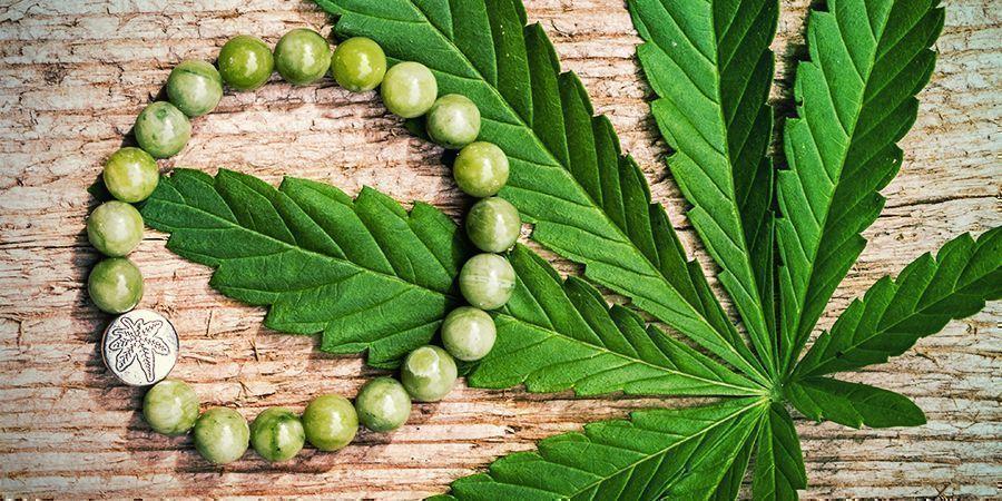 Le Chanvre, C'est Le Pied : Une Plante Aux Millions D'applications