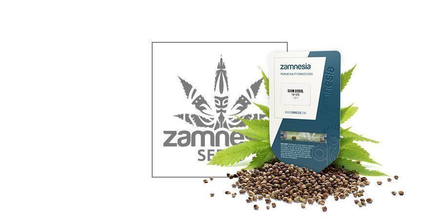 Sour Diesel (Zamnesia Seeds)