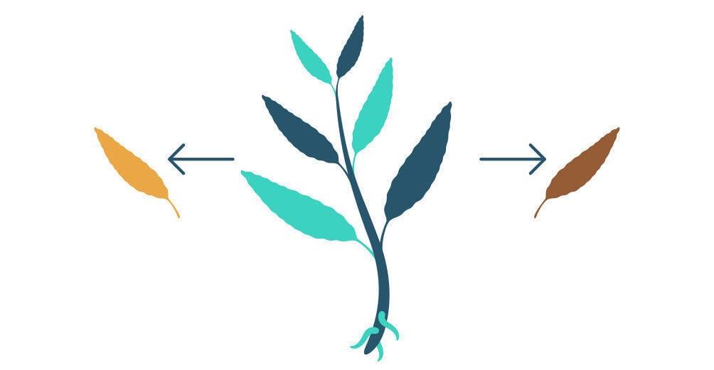 Étape 1: Multiplier La Salvia Divinorum À Partir De Votre Bouture