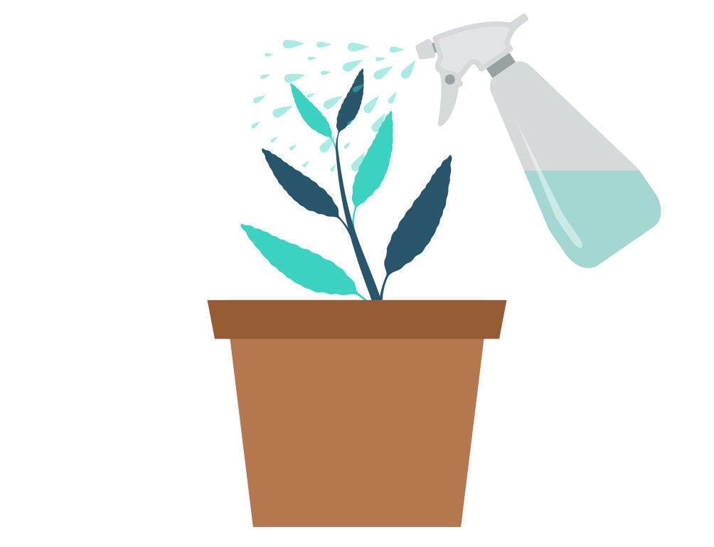 Étape 4: Multiplier La Salvia Divinorum À Partir De Votre Bouture
