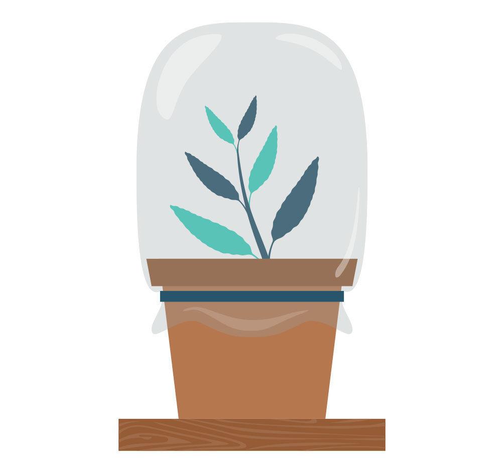 Étape 5: Multiplier La Salvia Divinorum À Partir De Votre Bouture