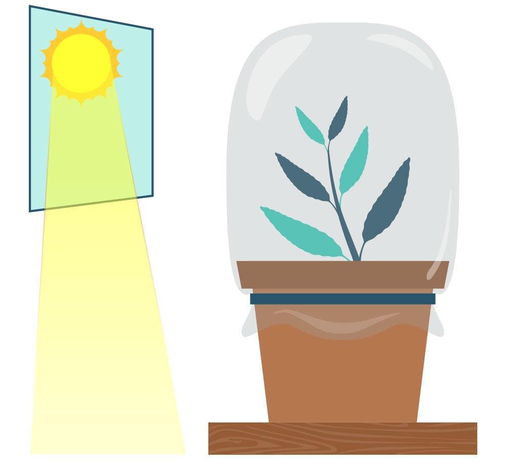 Étape 6: Multiplier La Salvia Divinorum À Partir De Votre Bouture
