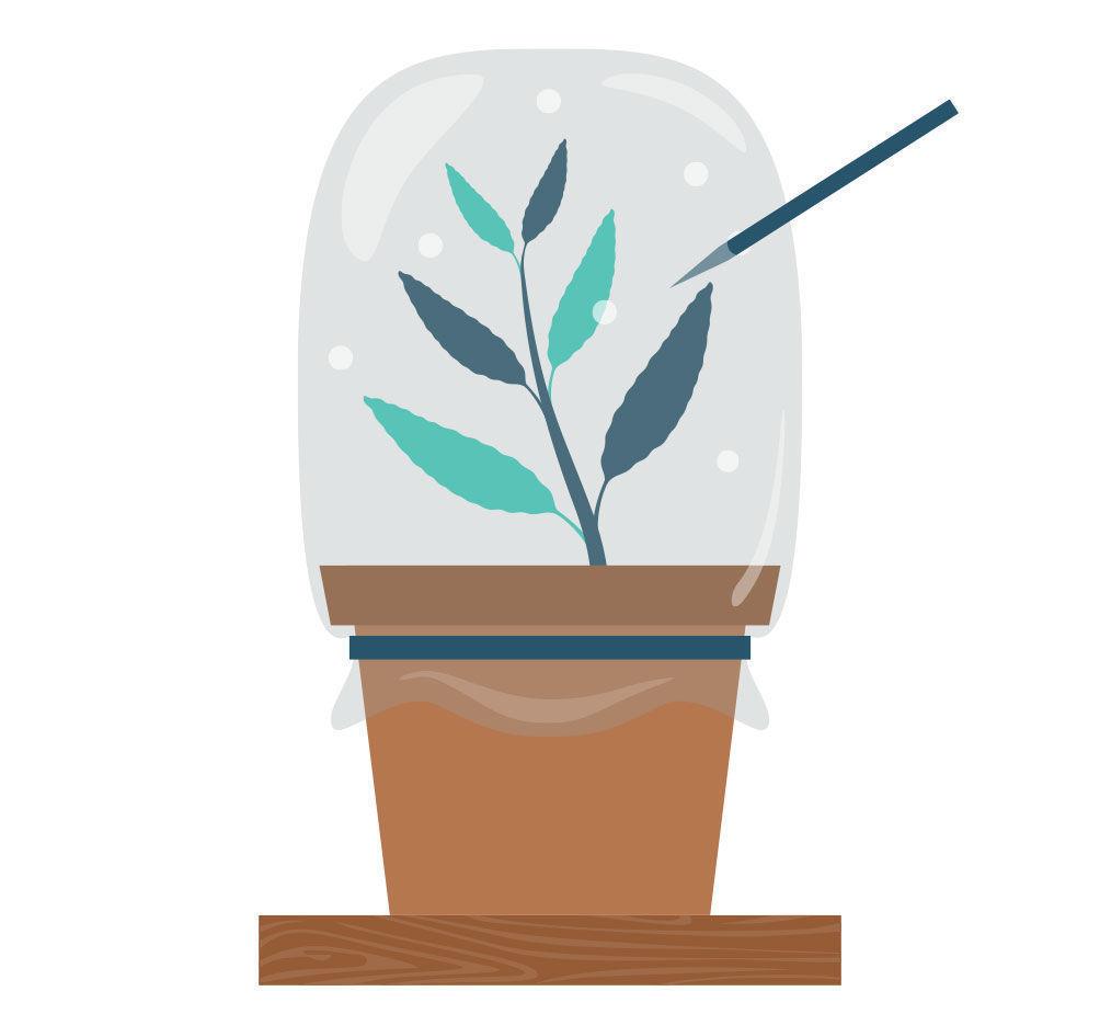 Étape 7: Multiplier La Salvia Divinorum À Partir De Votre Bouture