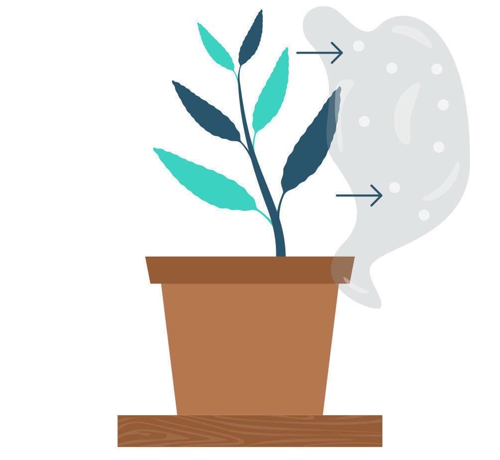 Étape 8: Multiplier La Salvia Divinorum À Partir De Votre Bouture