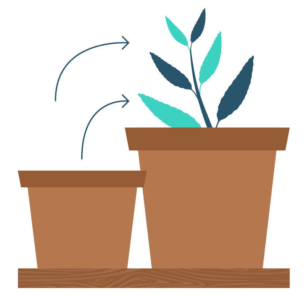 Étape 9: Multiplier La Salvia Divinorum À Partir De Votre Bouture