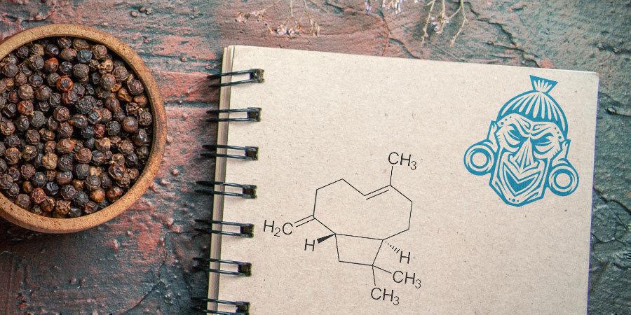 Qu'est-Ce Que Le Bêta-Caryophyllène