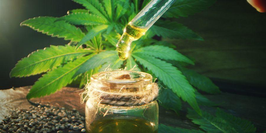 Dosage De L'huile D'olive Au Cannabis