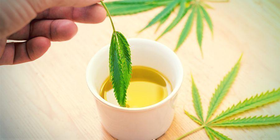 Qu'est-Ce Que L'huile D'olive Au Cannabis ?
