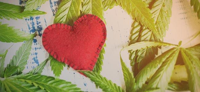 Pousser Votre Propre Herbe : Vous développez une relation avec la plante