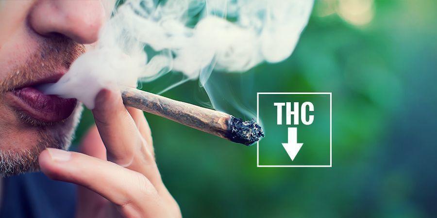 PEUT-ON ÉVITER D'AVOIR LES YEUX ROUGES ? cannabis