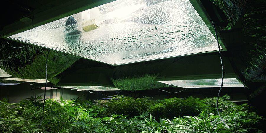 Vérifiez Votre Équipement - plantes de cannabis