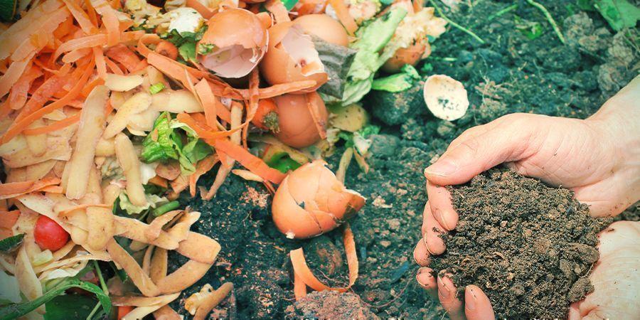 Ajuster Le pH De La Terre Avec Une Culture Organique