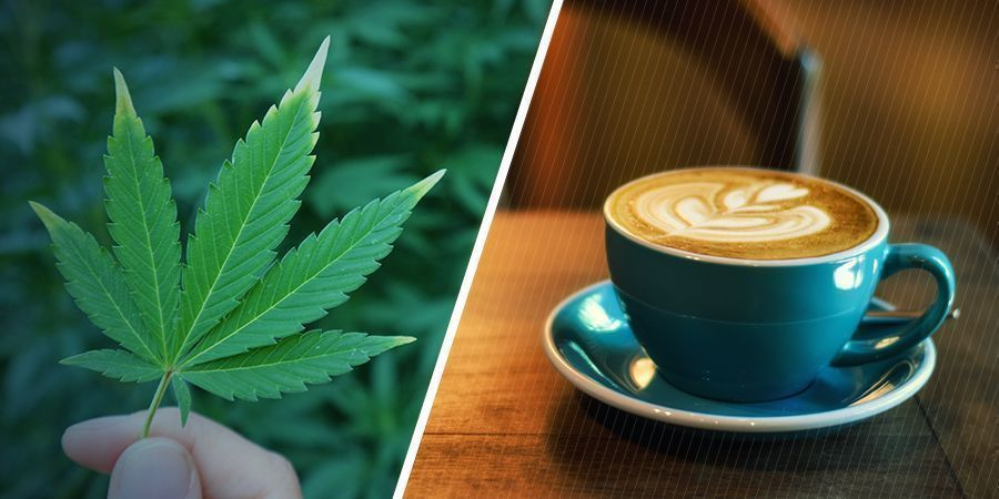 QUELS SONT LES EFFETS DU CANNABIS ET DE LA CAFÉINE SÉPARÉMENT ?
