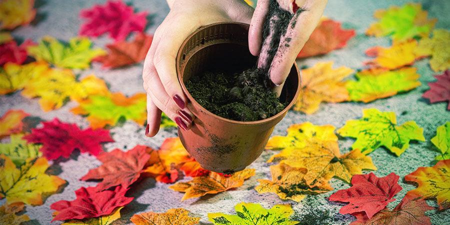 Remplir Le Pot Avec Le Milieu De Culture