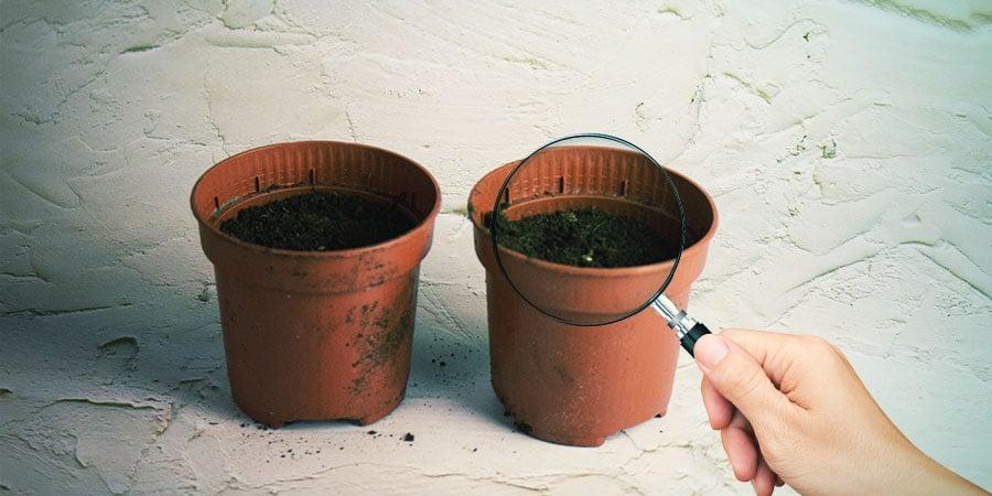Attendre Et Observer L'apparition De Petites Plantules