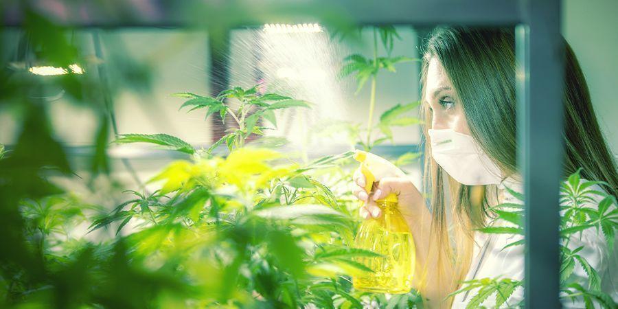 Quand Et Comment Faire Une Pulvérisation Foliaire Sur Vos Plants