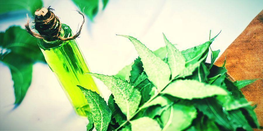 Huile De Neem - pulvériser vos plants de cannabis