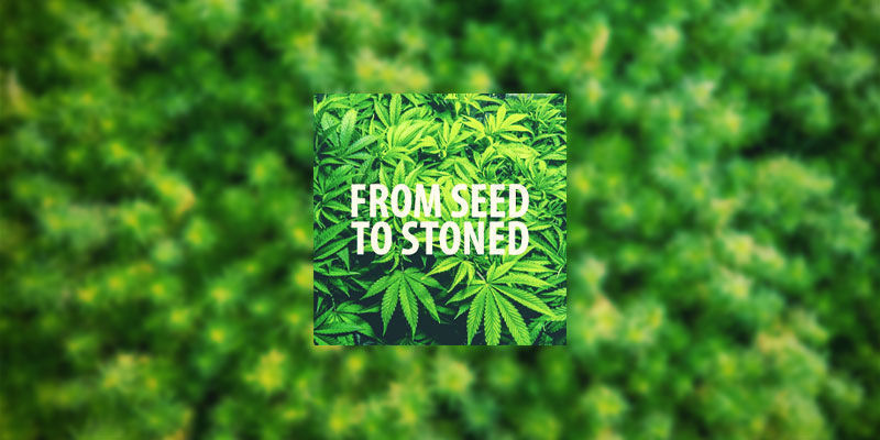 From Seed To Stoned   Youtube