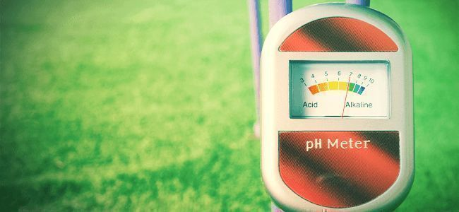 Meilleure Herbe: Comprenez Le pH