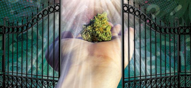 Le Cannabis Est Une Passerelle Vers D'Autres Drogues