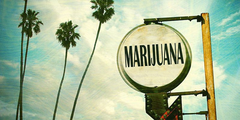 OG Kush Cannabis : Née Et Croisée En Floride ?