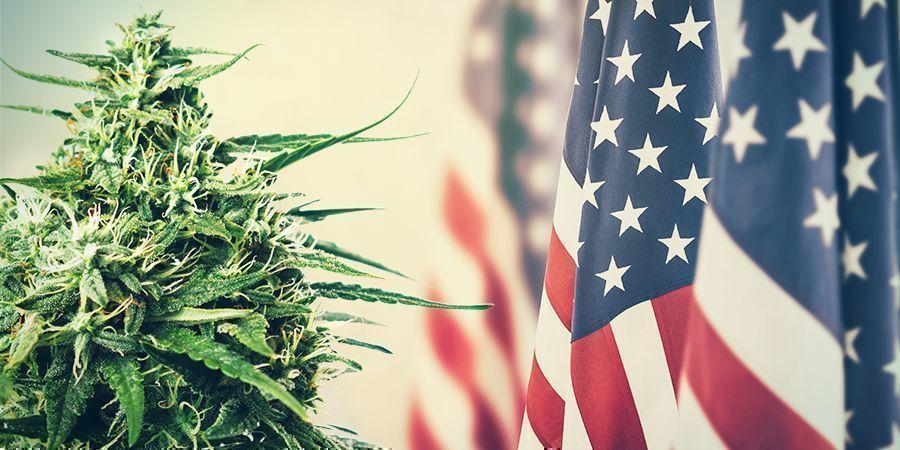 Cannabis: De La Taxation À La Prohibition