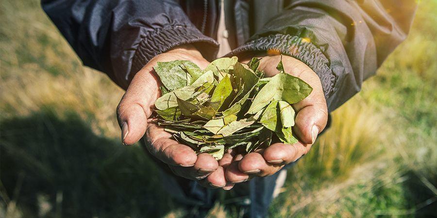 Impact Pour Le Cultivateur Guerre Contre Les Drogues