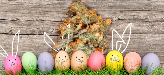 Choco Haze Zamnesia Easter