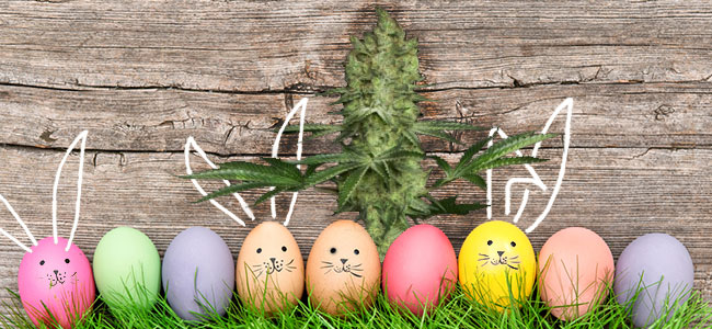 Ice Cream Paradise Seeds Easter