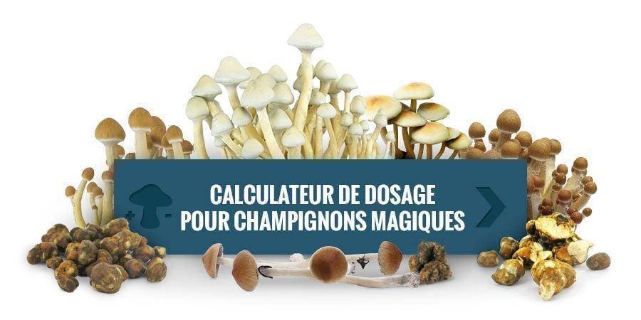 Calculateur De Dosage À Champignons Magiques