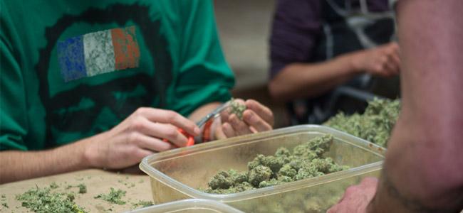 France Cannabis tailleurs de têtes
