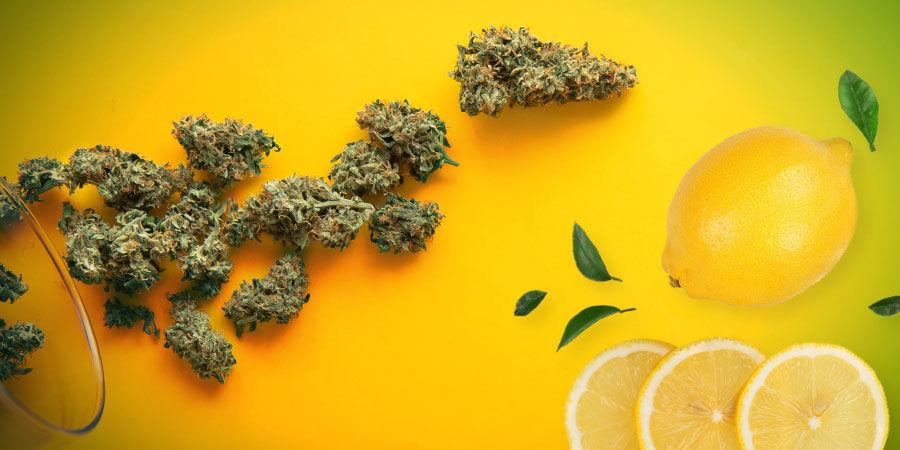 Fumer Amnesia Haze — Arôme, Saveur Et Effet
