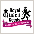 Sour Diesel (Royal Queen Seeds) Fem.