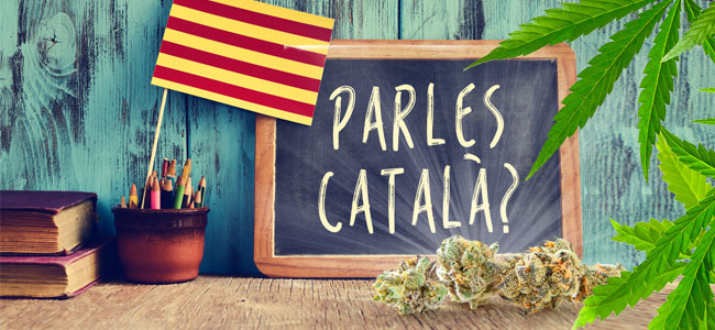 Cannabis Catalan