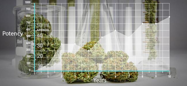 Le Cannabis D'aujourd'hui Est Plus Puissant Qu'autrefois