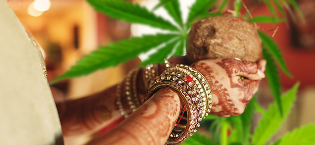 Bhang culture indienne