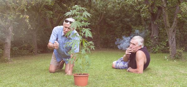 Environnement cannabis