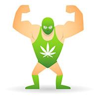 Cannabis trop fort