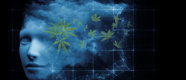 Rêves de cannabis