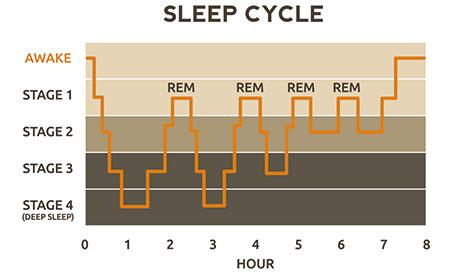 Cycle de sommeil