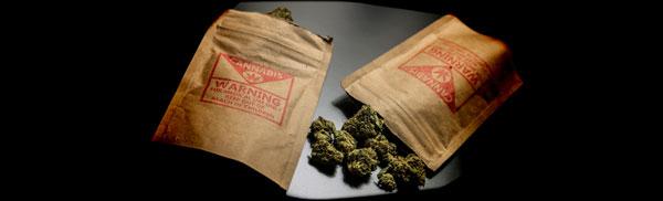 Consommation de cannabis contaminée