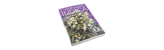 Cannabis indica vol3