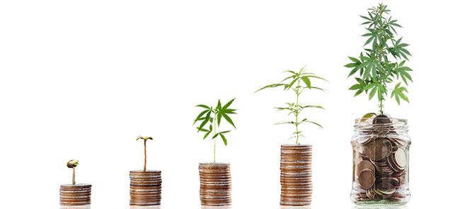 Marché allemand du cannabis en pleine croissanceGrowing German cannabis market